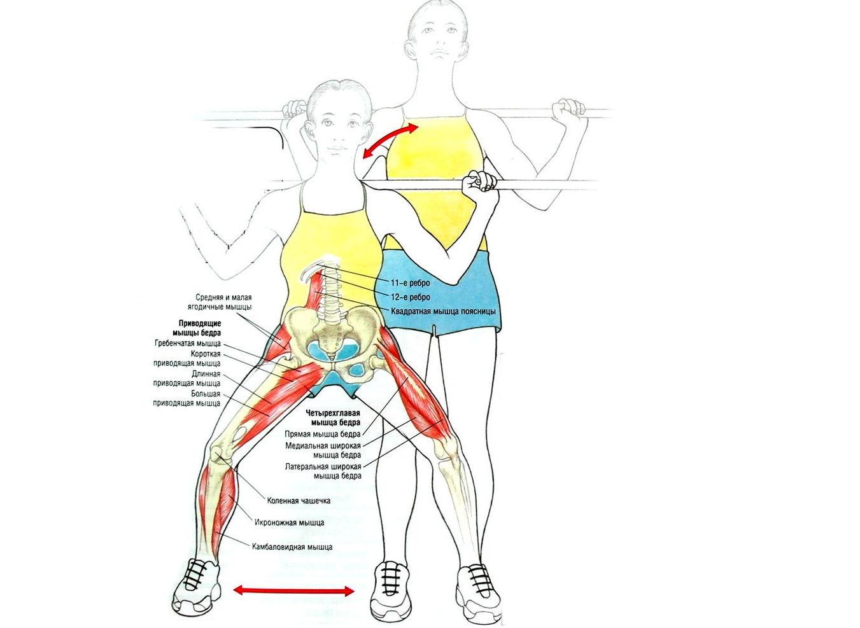 Анатомия: мышцы кисти. мышцы ладонной впадины. мышцы thenar (тенара). мышцы hypothenar (гипотенера).