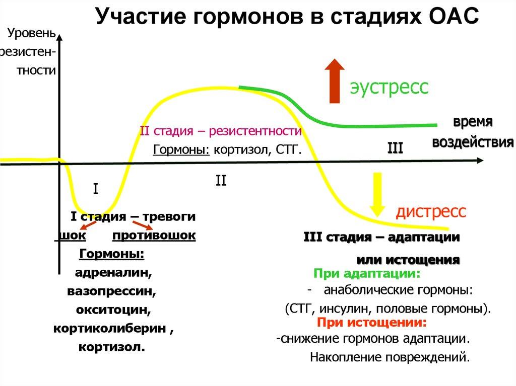Глюкокортикоиды: кортизол и кортикостерон. транскортин. липокортин. регуляция секреции и физиологические эффекты глюкокортикоидов.