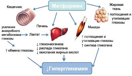 Метформин: как принимать, чем заменить, противопоказания