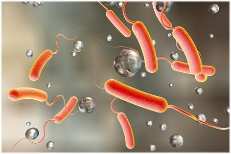 Холера: симптомы, причины, методы лечения и профилактики