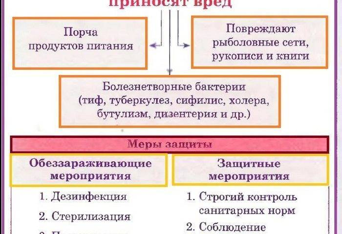 Бактериальные и вирусные заболевания