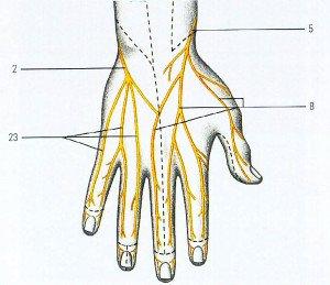 Часто немеют пальцы на левой руке почему и что делать