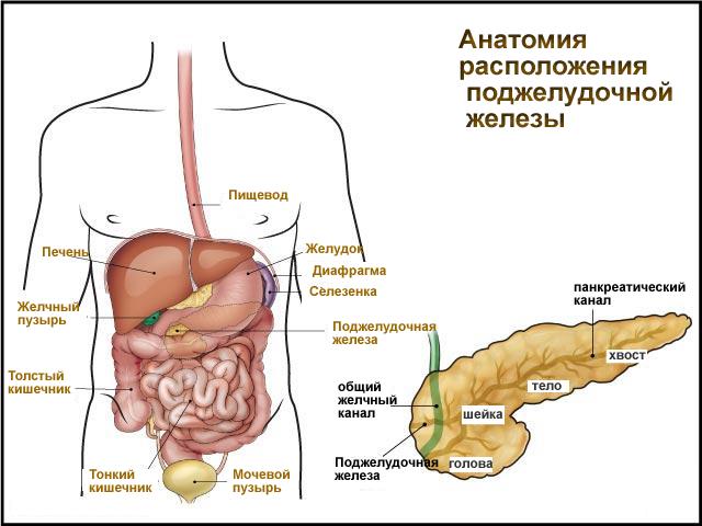 Профилактика и лечение заболеваний поджелудочной железы и печени