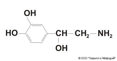 Адреналин. норадреналин. apud-система. катехоламины. контринсулярный гормон. адреномедуллин. гормоны мозгового вещества надпочечников и их эффекты в организме.