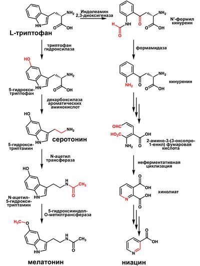 Мелатонин — википедия. что такое мелатонин