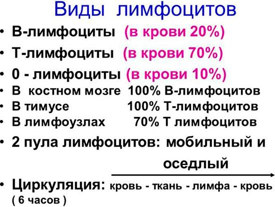 Анализ крови базофилы лимфоциты моноциты