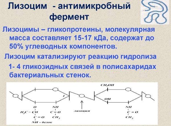 """""""лизобакт"""": побочное действие, инструкция по применению и противопоказания"""