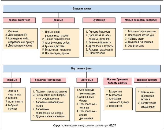 Синдром соединительнотканной дисплазии у детей и взрослых: причины и симптомы, стадии и лечение