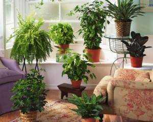 Болезни комнатных растений. защита комнатных растений от вредителей