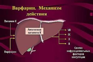 Диета при приеме варфарина для быстрого и эффективного похудения на your-diet.ru.   здоровое питание, снижение веса, эффективные диеты