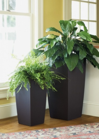 Почему дома и в офисе должны быть растения