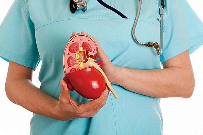 Протеинурия – что это такое, от чего она зависит и как справиться с проблемой