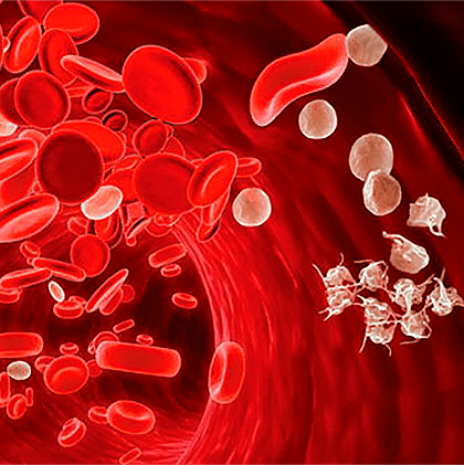 Клетки крови: эритроциты, лейкоциты, тромбоциты