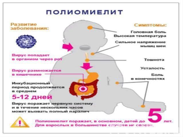 В садик без прививки от полиомиелита,реально? - запись пользователя анна (id1317769) в сообществе мы против прививок! в категории полиомиелит - babyblog.ru