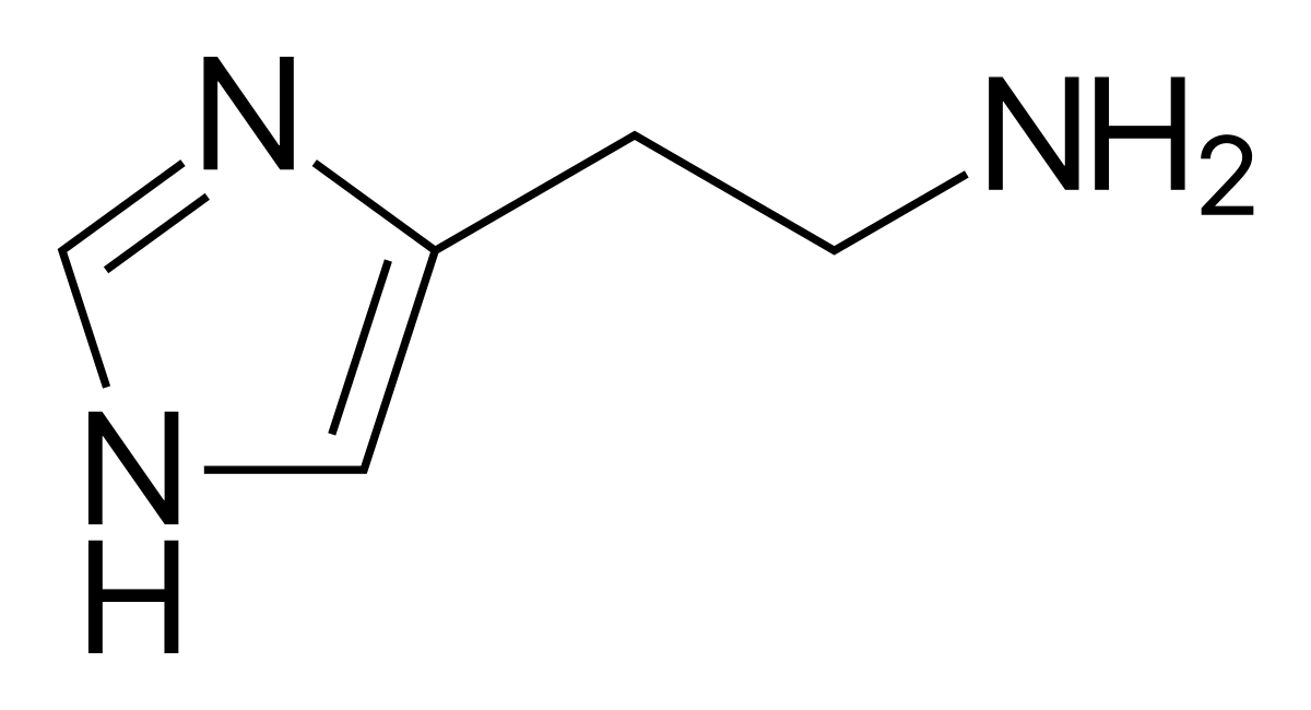 Гормон гистамин: что это такое, где и как вырабатывается, список препаратов гистамина