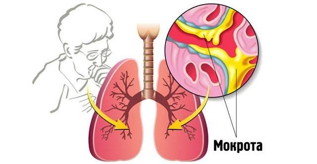 Влияние курения на органы дыхания: почему после попадания никотина появляется одышка и тяжело дышать