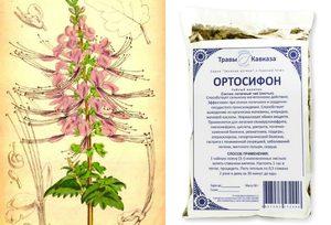 Ортосифон тычиночный или почечный чай – целебные свойства и секреты применения