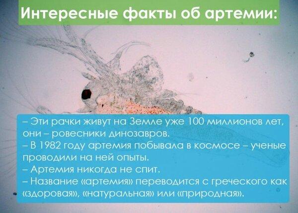 Заказать капли алкопрост на официальном сайте