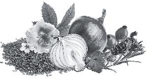 Соленые огурцы: польза и вред для организма