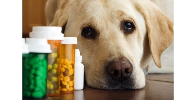 Отравление тубазидом собак и людей — симптомы и последствия