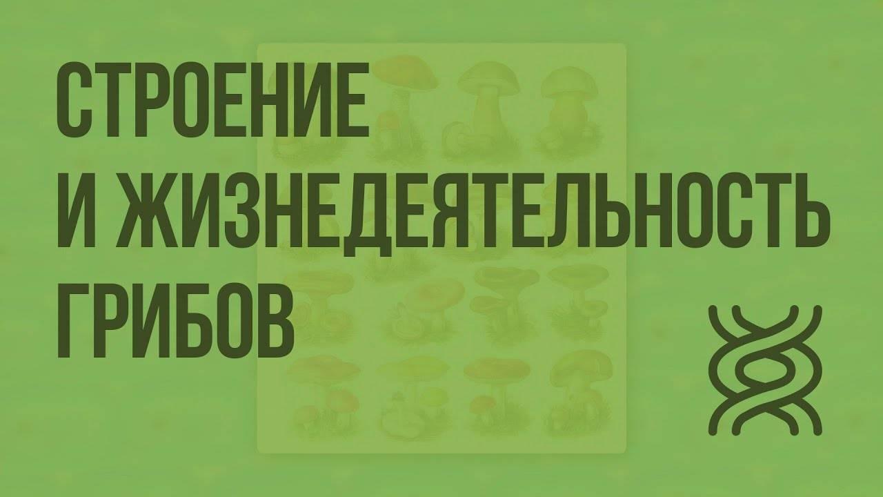 Заболевания, вызываемые бактериями у человека. список, симптомы и лечение