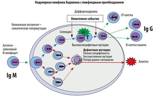 Понятие. этиология. патогенез.