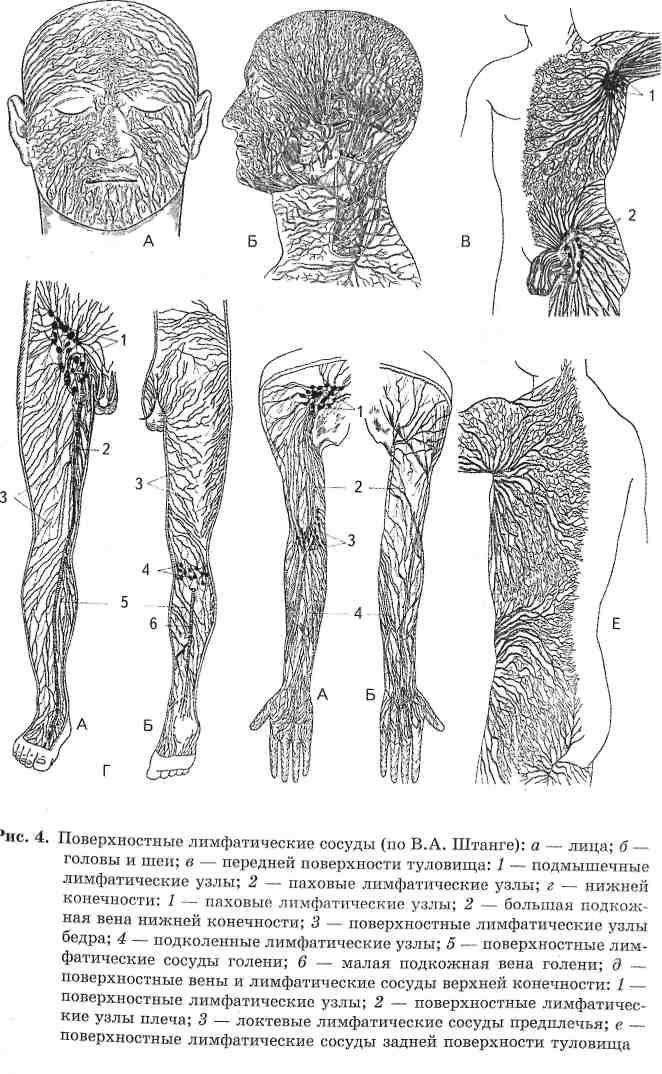 Польза и вред массажа при бронхите, его виды и техника исполнения