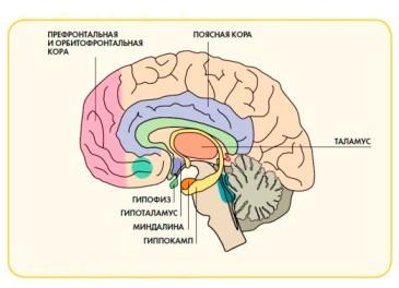 Детская психосоматика. взгляд психолога, гипнотерапевта геннадия иванова