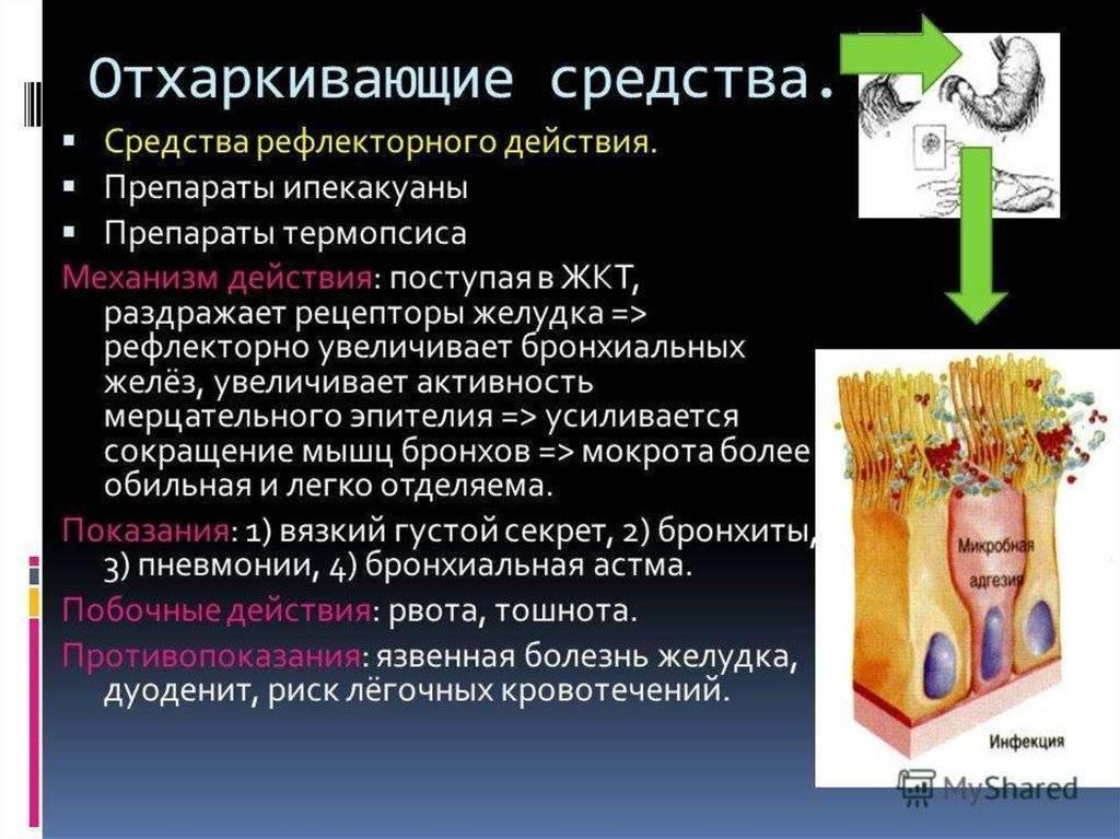 Отхаркивающие средства при лечении бронхита: препараты для взрослых и детей