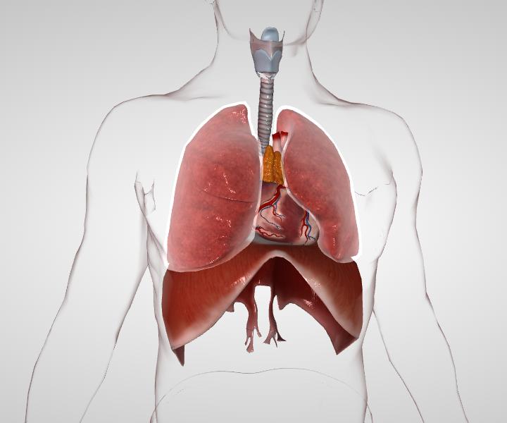 Кальцинаты в легких - не приговор и не диагноз