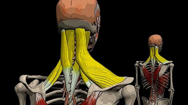 Почему болит голова в затылке с левой стороны