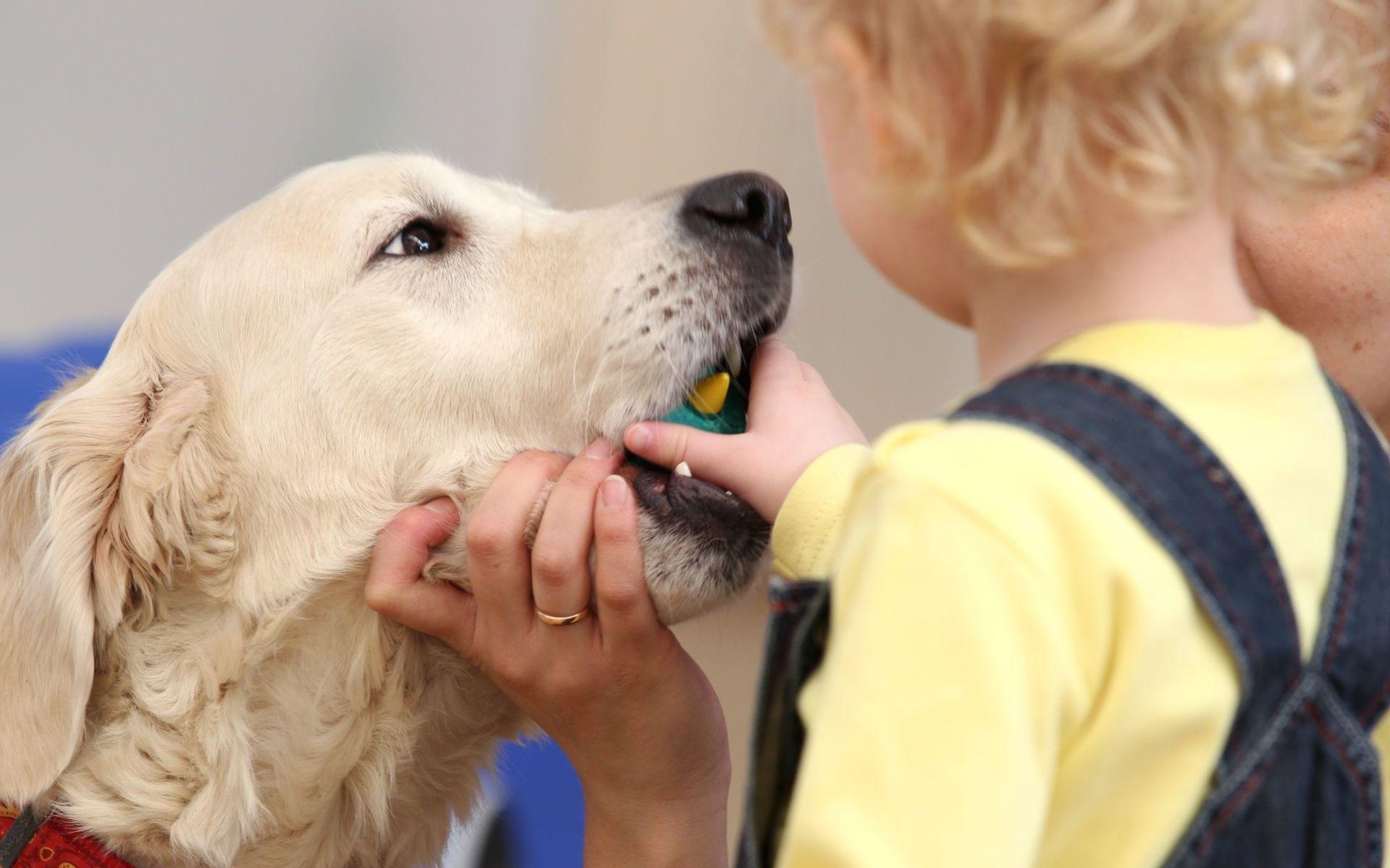 Отравлениеизониазидому собак: признаки, лечение, меры предосторожности