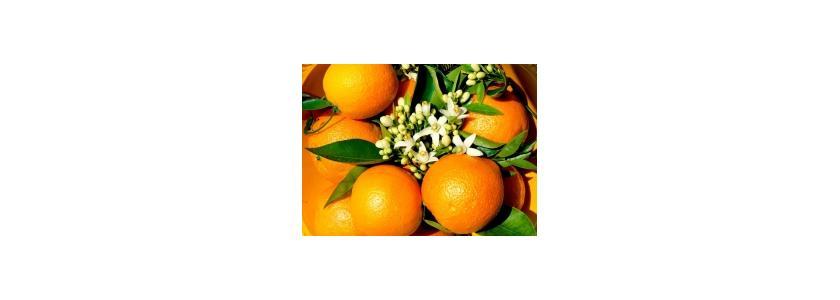 Что преобладает в апельсиновом соке: польза или вред и как его правильно пить