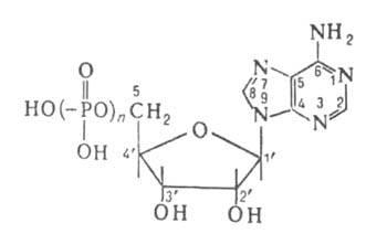Аденозиндезаминазы - adenosine deaminase