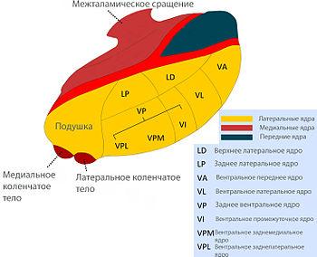 Medweb - паркинсонизм: другие расстройства, которые напоминают болезнь паркинсона