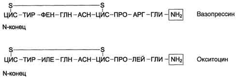 Антидиуретический гормон (адг) – функции, анализ на вазопрессин, недостаток, избыток вазопрессина