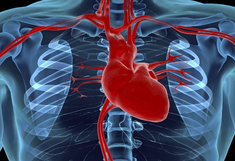 Открыто овальное окно у новорожденного - открытое овальное окно в сердце у ребенка - стр. 1 - запись пользователя инна (batinka) в сообществе здоровье новорожденных в категории болезни сердца - babyblog.ru