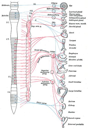 Периферическаянервнаясистема,еестроениеифункции
