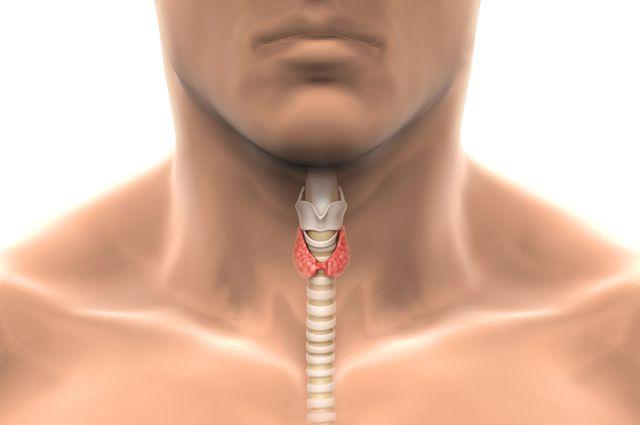 Основные симптомы нарушения функции щитовидной железы