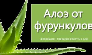 Алоэ при бронхите: можно ли лечить недуг, а также применение сока растения с медом и другие рецепты для детей и взрослых