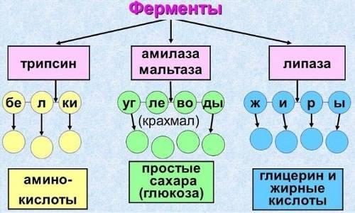 Вобэнзим инструкция по применению