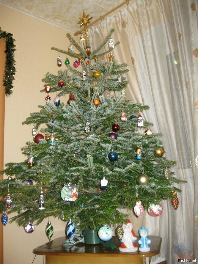 Елочка, гори: проверка разных типов новогодних деревьев на огнестойкость // нтв.ru