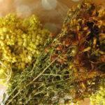 Какие травы полезны для печени?
