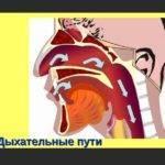 Симптомы Гранулематоза Вегенера и прогноз жизни