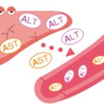 Показатели АЛТ и АСТ при гепатите: норма и отклонения