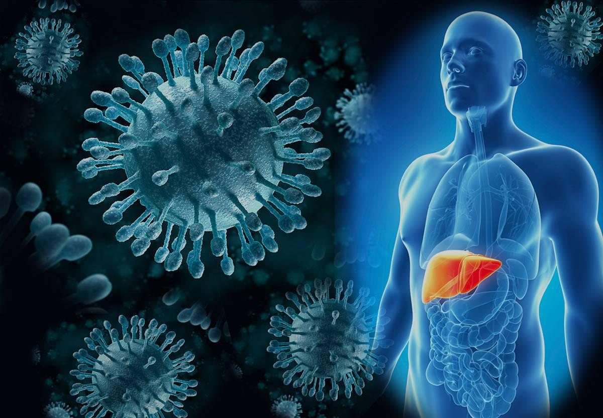 Чем лечить гепатит С при циррозе печени