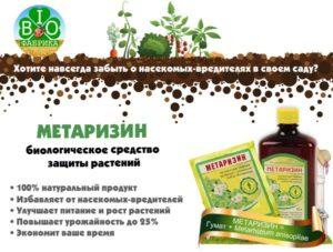 Новинка — биопрепарат метаризин