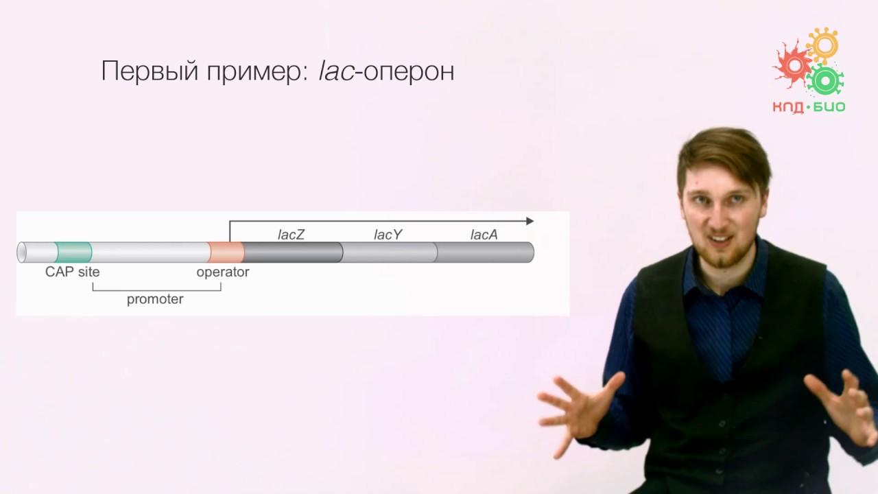 Регуляция экспрессии генов. известно, что гены определяют структуру всех молекул, из которых состоят клетки живых организмов, контролируют все метаболические. - презентация