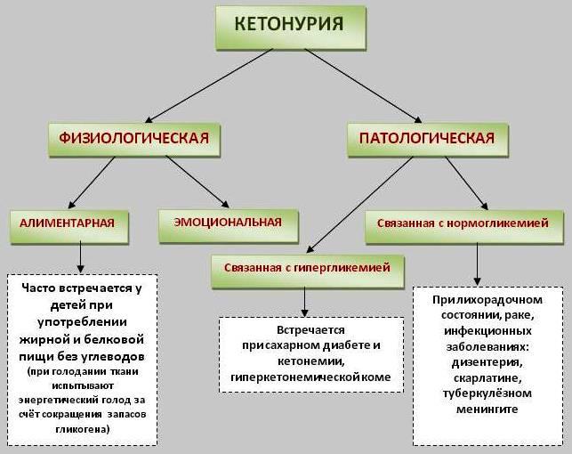Кетоновые тела (кетоны) в моче при беременности: причины, симптомы, лечение, диета
