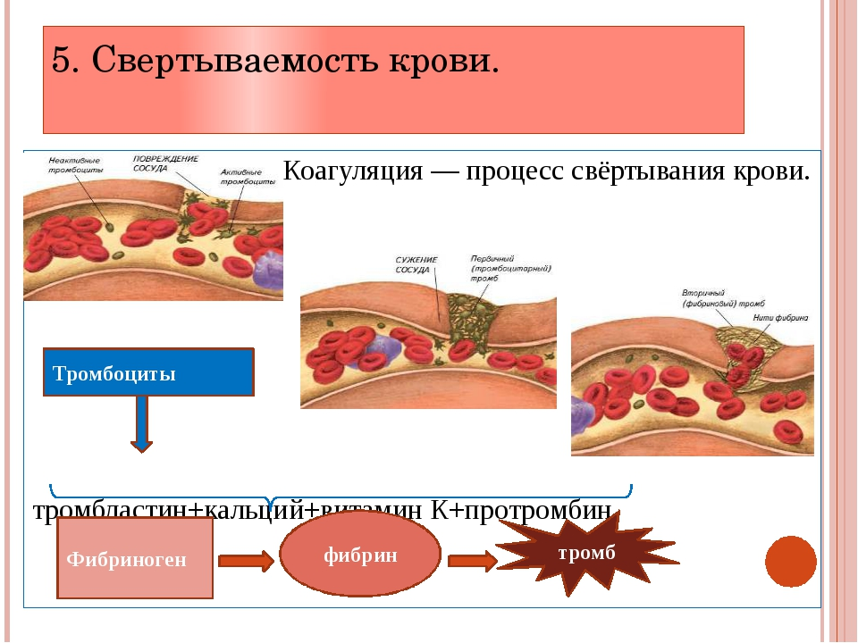 Основная функция тромбоцитов